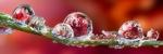 Биоактивные жидкости (cмеси)