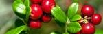 Линия Чистых растений (моно)